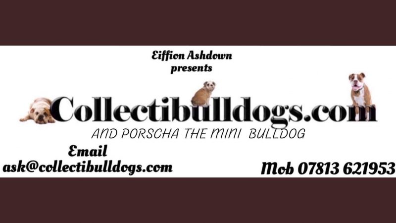 World's first bulldog memorabilia museum online rebuild