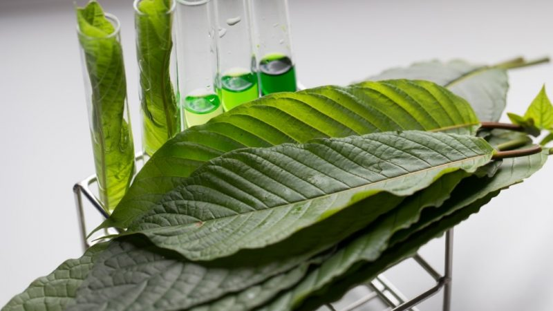 Benefits of Kratom To Your Wellbeing