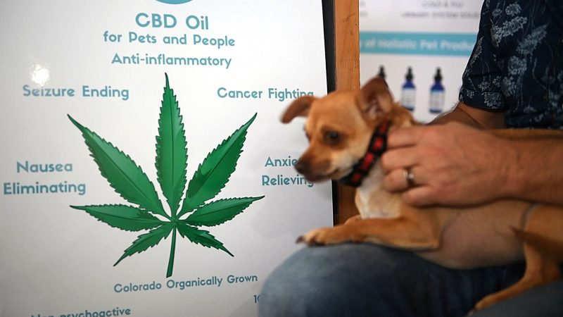 CBD Oil: The Miracle Oil for Dogs