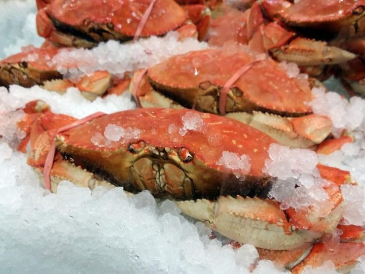 Dungeness crab for sale::