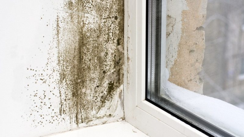Residential Dampness: Mold And Water Damage Repair