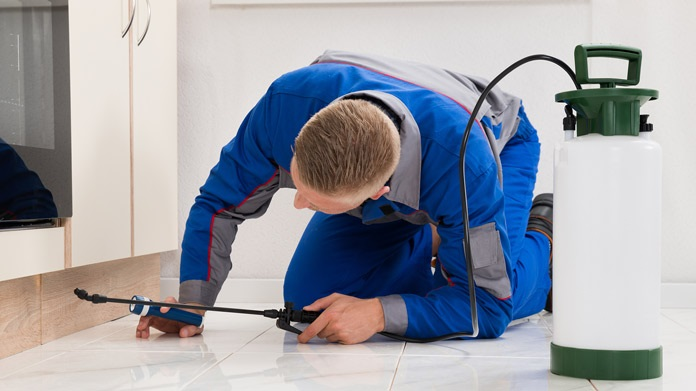 Tips To Keep In Mind before Hiring Pest Control Company