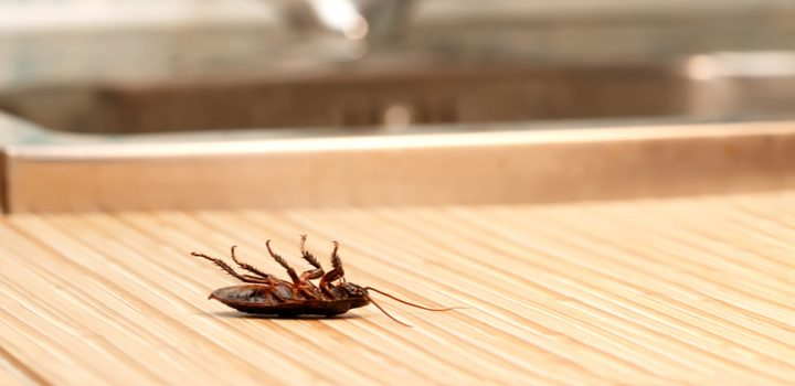 Learn about the most common pests in the UK