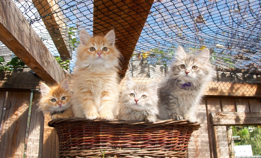 Make Your Cat Enjoy and Feel Safe Outdoors with A Catio