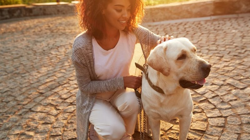 Groom your pet for good habits to make it your loyal friend forever