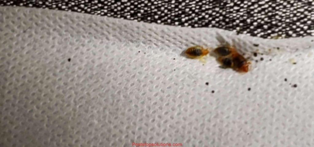 Do Not Ignore These Bed Bug Warning Signs!
