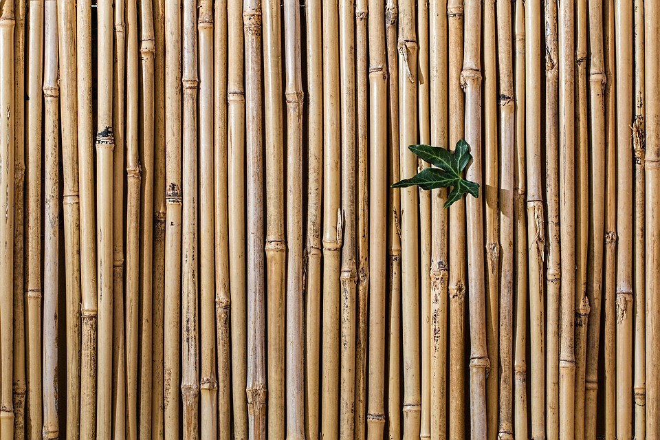 The Importance of Bamboo Products for Today's World