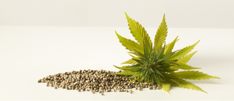 Tips for buying Cannabis Seeds for Sale