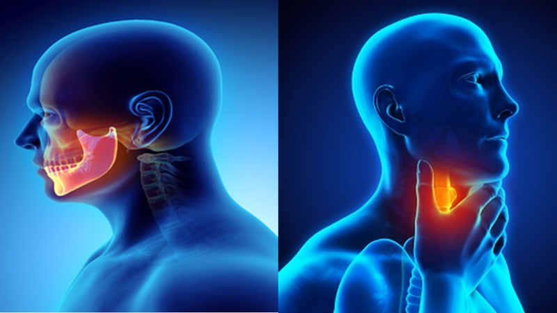 What Are Head as well as Neck Cancer?