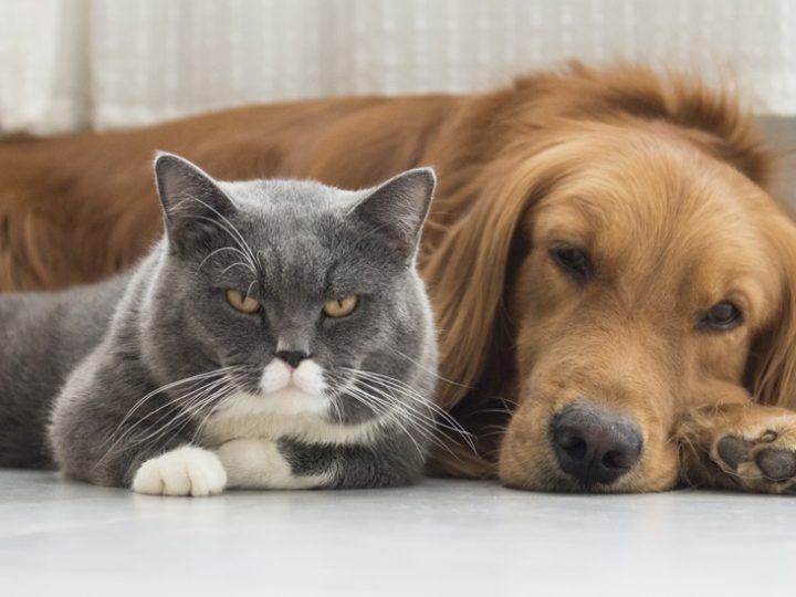 Best Pet Blogs And Websites For Pet Owners & Lovers