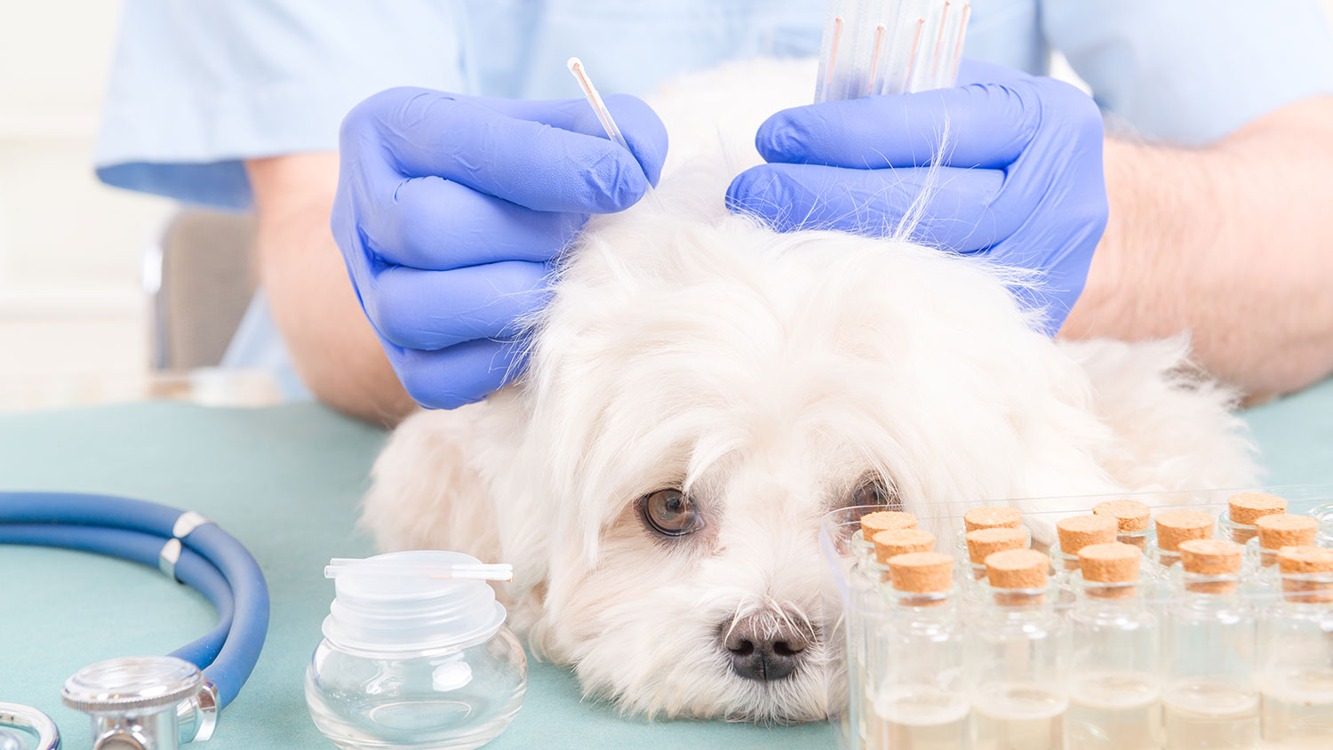 Can Pet Acupuncture Help?