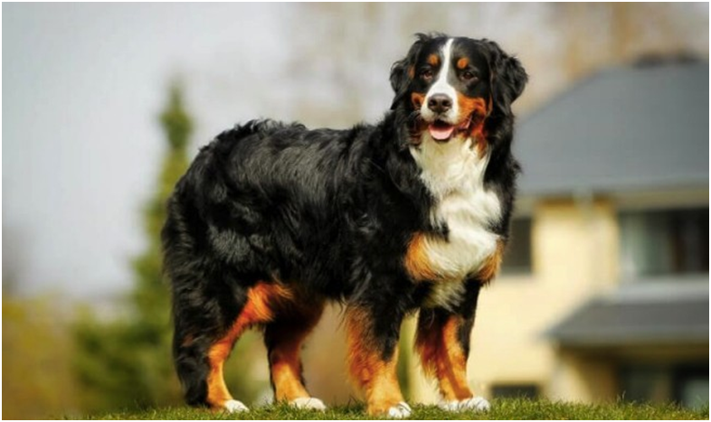 How To Choose A Large Dog Bark Collar? When To Put On A Large Dog Bark Collar?