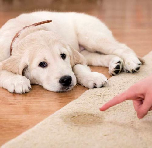 Tips to potty train your new pup