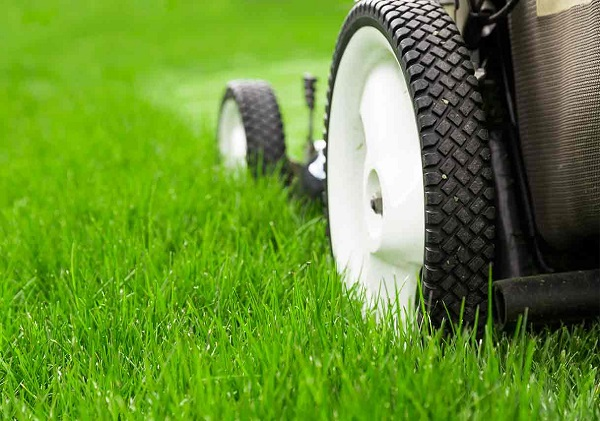 How to Keep Your Lawn Healthy?