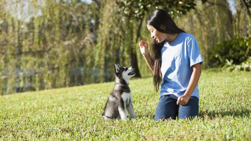 Three Commands To Set You Up For Effective Dog Training