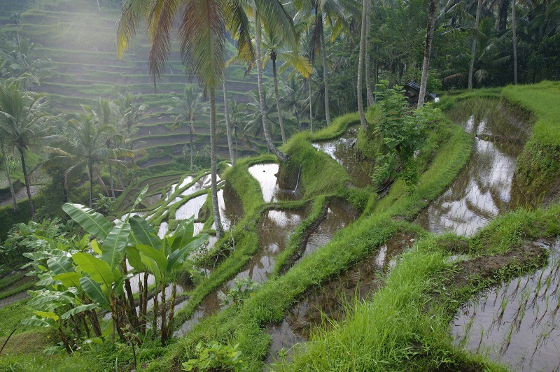 Take Help Of The Environmental Companies For Using The Land Without Any Damage