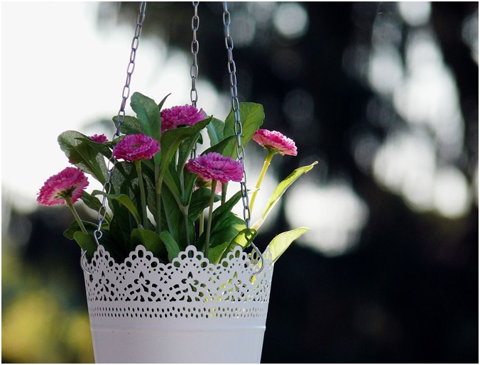 Top 7 Flowering Plants for Hanging Baskets