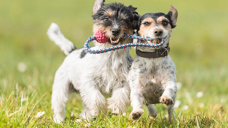 5 Benefits of Doggy Daycare