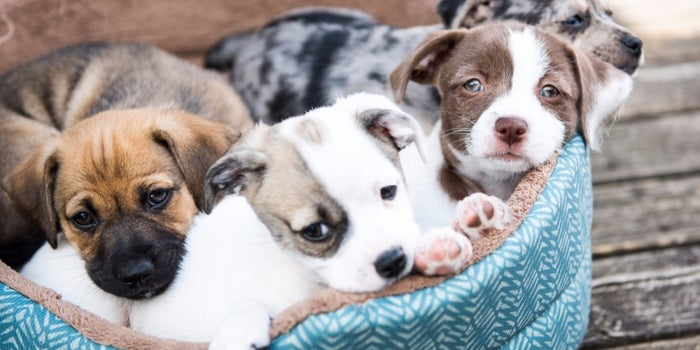 11 Steps To Starting Your Own Pet Care Business